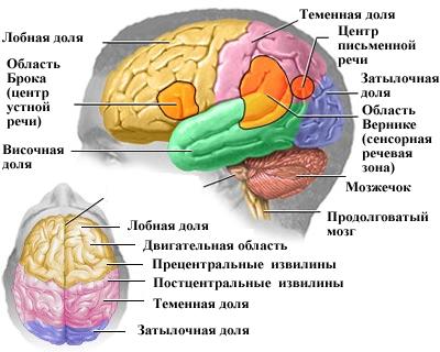 Рак и опухоли головного мозга: